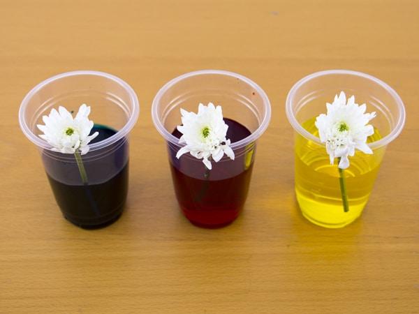 Dye Flowers kids activity Step 1