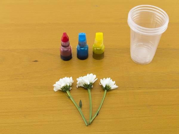 Dye Flowers kids activity Supplies