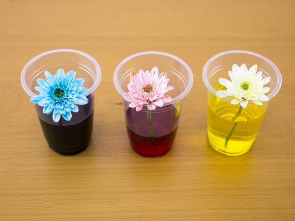 Dye Flowers kids activity step 2