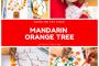 Mandarin Orange Tree Art